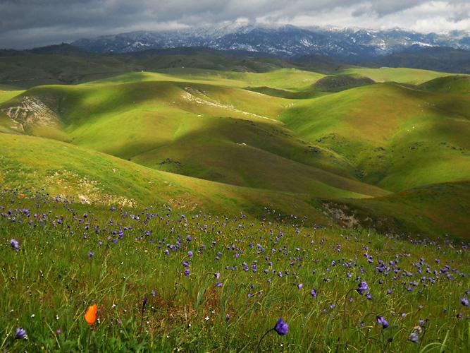 California Winter Wildflowers 2