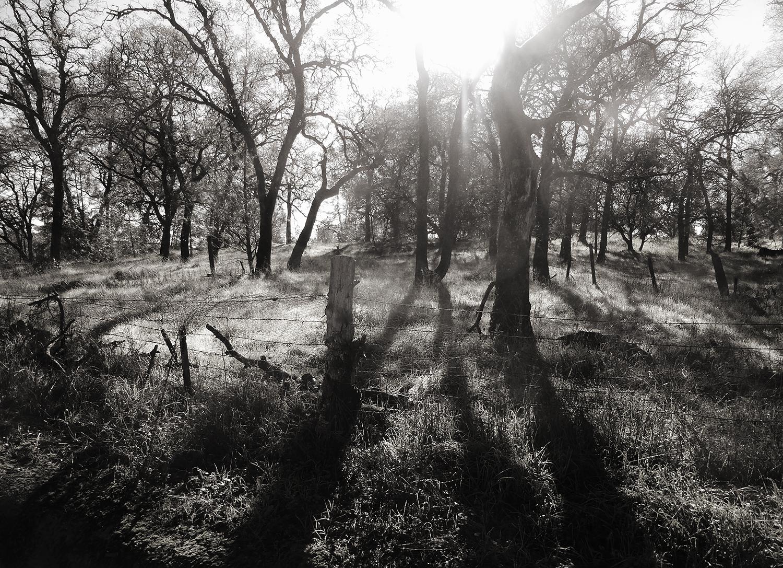 Morning Grove