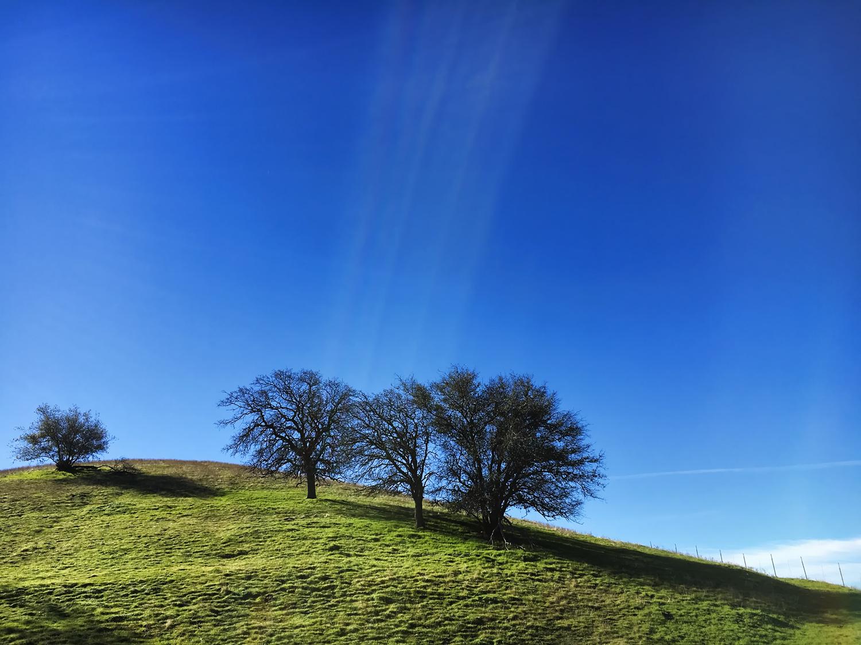 Oaks on the Mountain