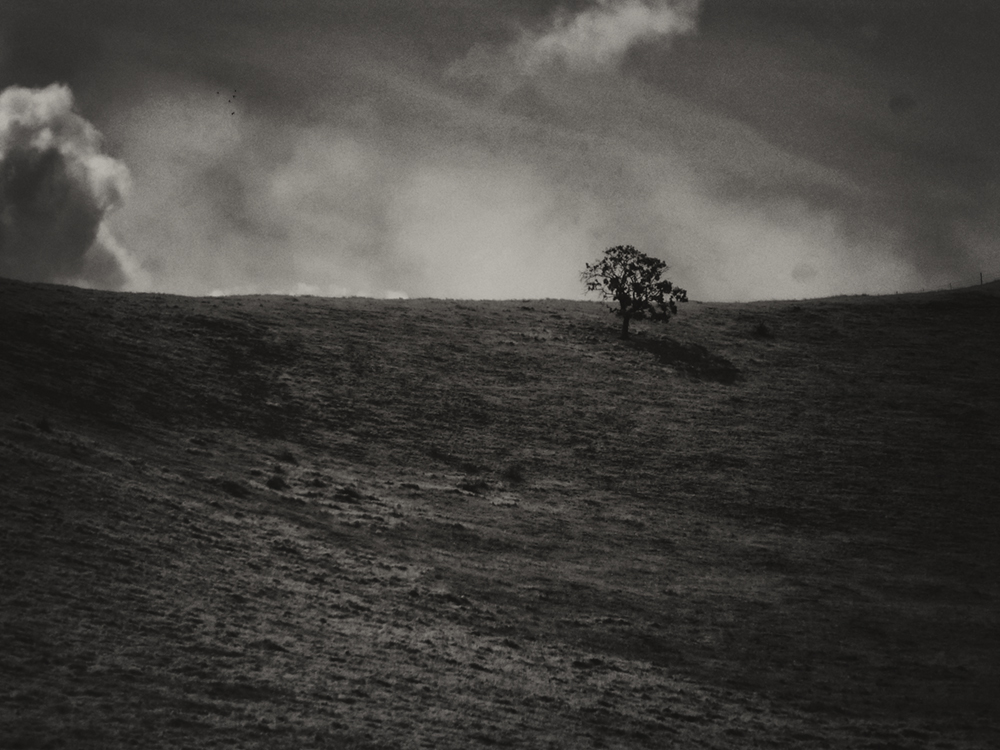 Chris Nielsen Photography - Lone Tree