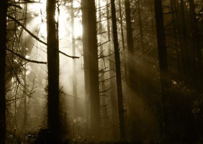 CN - Foggy Forest Morning
