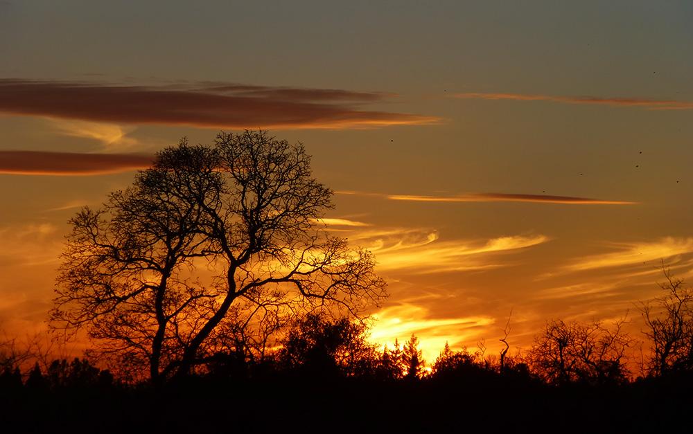 Auburn Oaks Sunset
