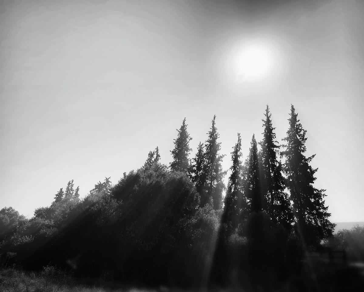 Chris Nielsen - Apricity