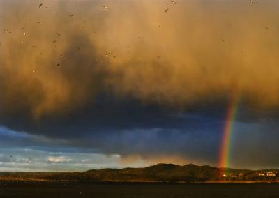 P1090689_Rainbow_Birds_1200_final