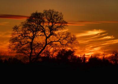 """Auburn Oak Sunset - 16""""x20"""""""