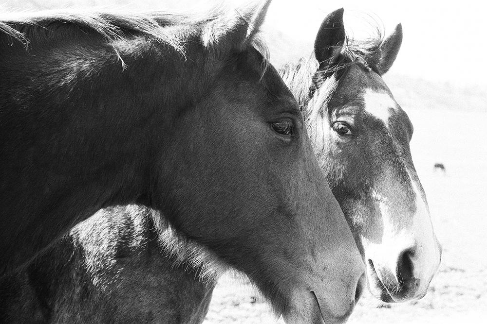 """Horses (film) -20""""x30"""""""