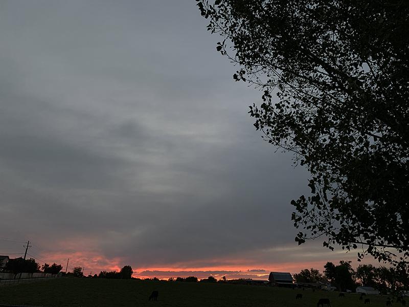 Sunset in my back yard