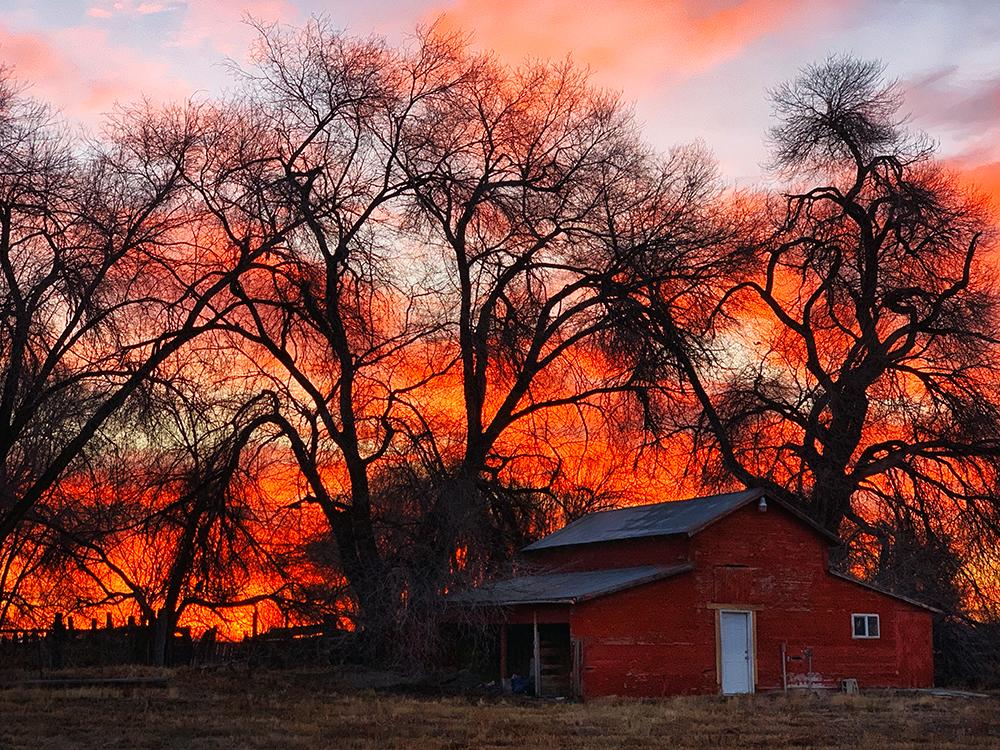 Early Sunrise Behind Barn